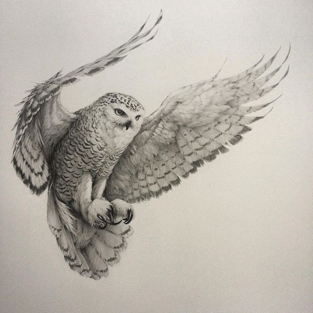 It's 'owl' over bar the hooting! I've finally finished this snowy owl in flight those wings just kept going and going It's been a real labour of love and pencil sharpening but I'm happy with how the fellow turned out and planning a few more 'in flight' pieces. by vanessafoley