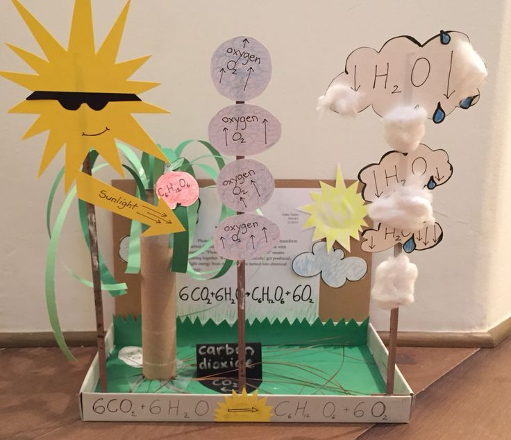 Photosynthesis 7th grade project- love the hands on and 3D effect!