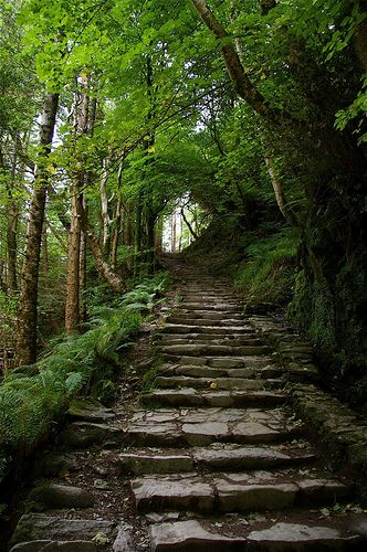 Steps Into the Woods - Killarney, Ireland. This leads up from Torc Waterfall