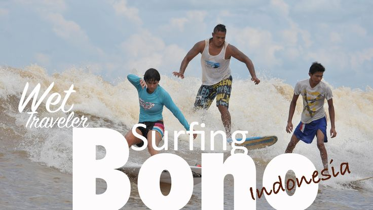 Surfing Bono is surfing in the Kampar river of Indonesia. The waves called tidal bore, come from the hightide from the ocean, and rolled along the river to the upstream.