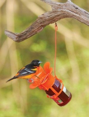 SEBCO212 Large Orange Blossom Attracts Orioles Includes jelly jar Hanger System included Easy to use Easy to clean