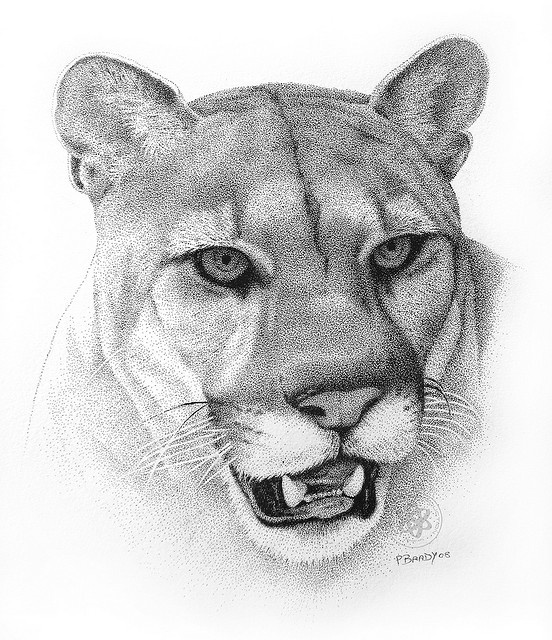 Cougar Face Line Drawing : Curated paul brady ideas by jorgesalvadorfo al pacino