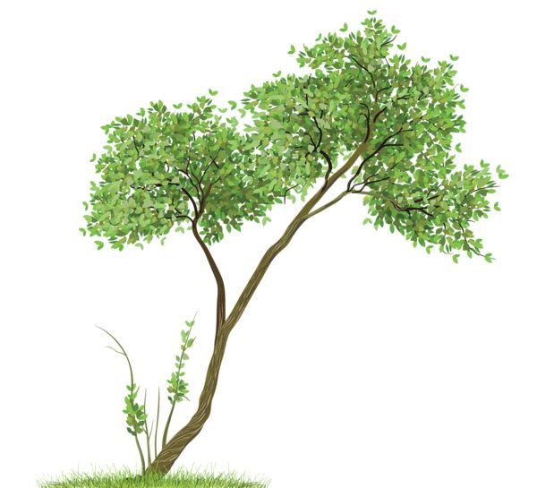 Transparent Tree PNG Clipart
