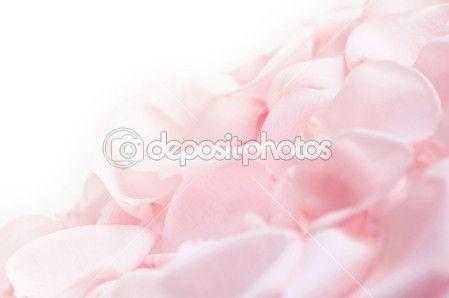 розовые лепестки розы — Стоковое изображение #4825765