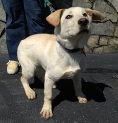 Adopt Dog Richmond Virginia