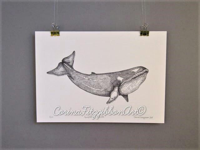 """Humpback Whale"" Limited Edition 