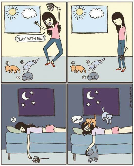 So true! Cats usually want to play when you're trying to sleep!