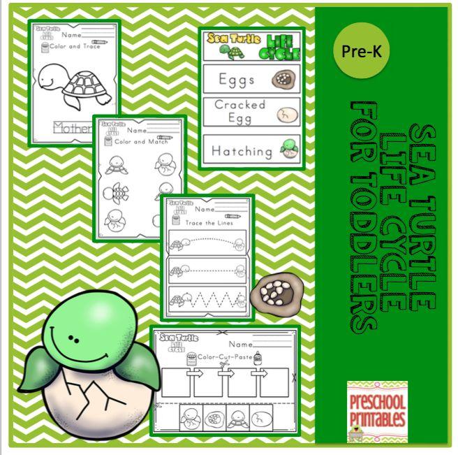 Sea Turtle Life Cycle for Preschool | Preschool Printables ...