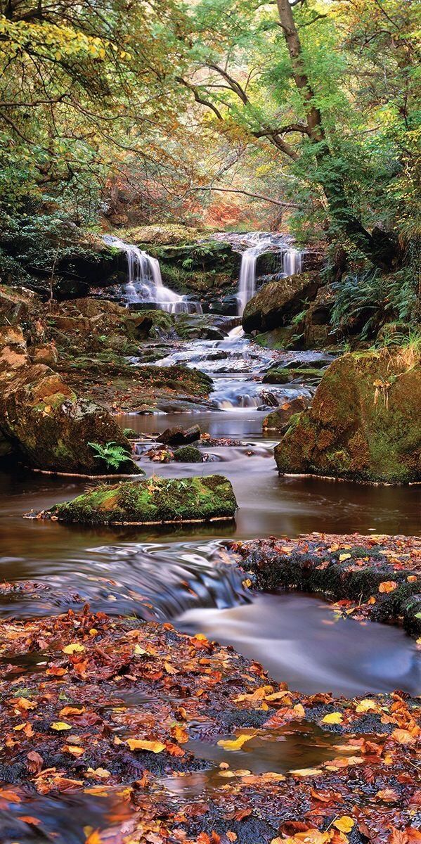 Autumn at Falling Foss Waterfall , Whitby. North Yorkshire
