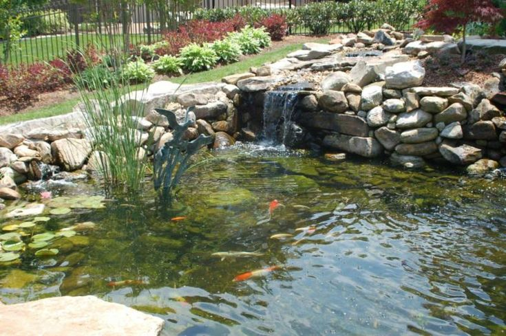 15 best images about koi ponds on pinterest gardens for Koi fish predators