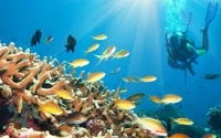 Some of the best diving in the world is in Malaysia