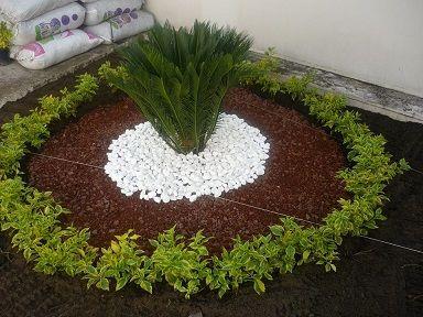 Diseño con palma cyca y duranta cubana. Accesorios piedras mármol blanca y tezontle