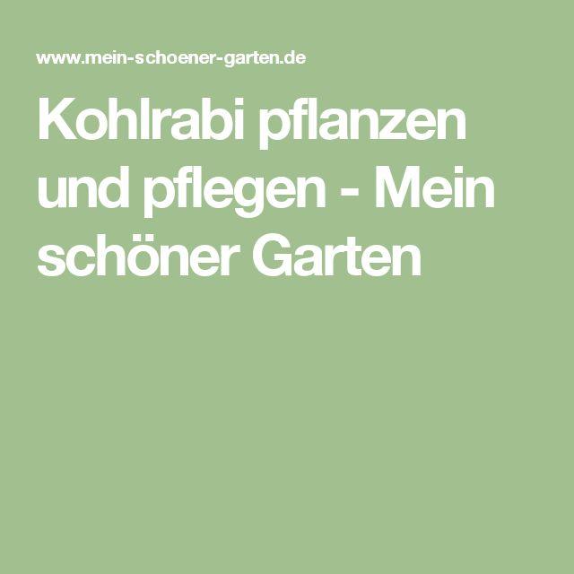 Kohlrabi pflanzen und pflegen - Mein schöner Garten