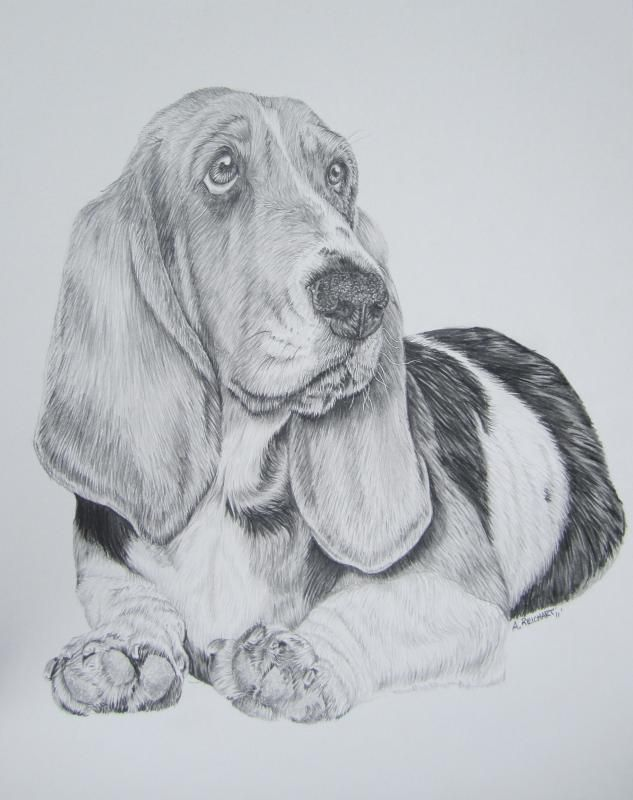 Basset hound pencil by xx ashley