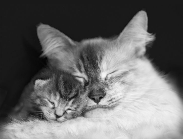 Black & White Photograph of Rescue Cat Hugging Her by LAPSLangley, $10.00