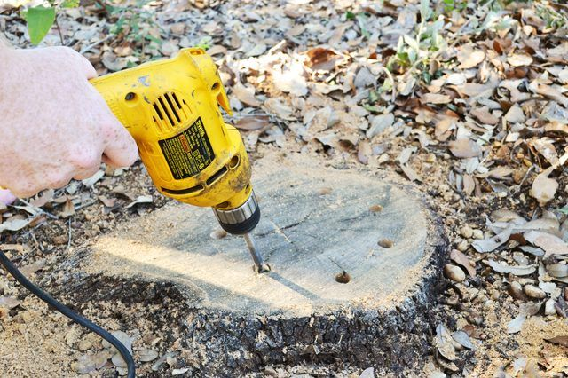 How to Use Bleach to Kill a Tree Stump Removing a tree stump is a difficult job, but if you drill holes in the stump and pour bleach into the holes and allow it to rot, the removal is easier. (with Pictures) | eHow