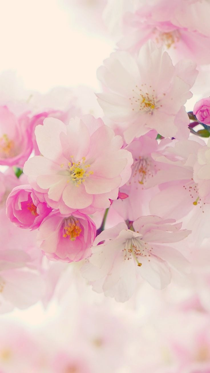 50 Beautiful Flower Wallpapers For Iphone Free Download Flower Iphone Wallpaper Spring Wallpaper Flower Wallpaper