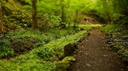 trail through woods tilt shift wide hd wallpaper