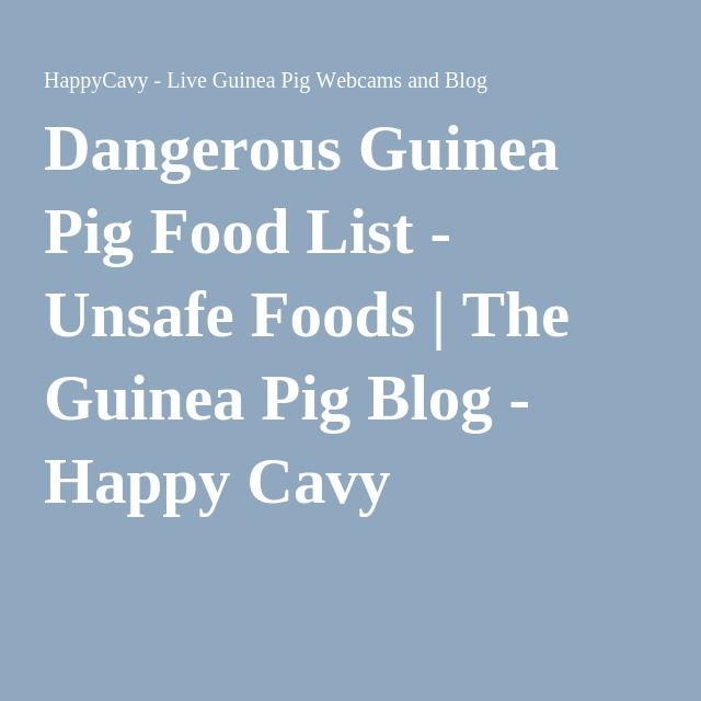 Dangerous Guinea Pig Food List - Unsafe Foods   The Guinea Pig Blog - Happy Cavy