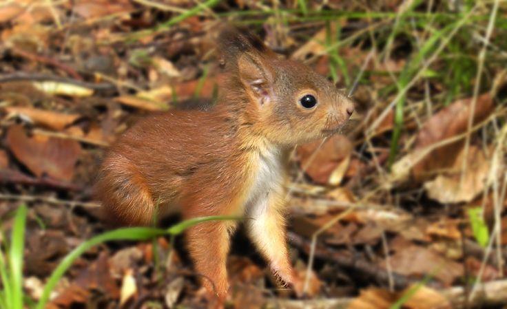 Egy mókuscsalád életének bensőséges pillanatai...