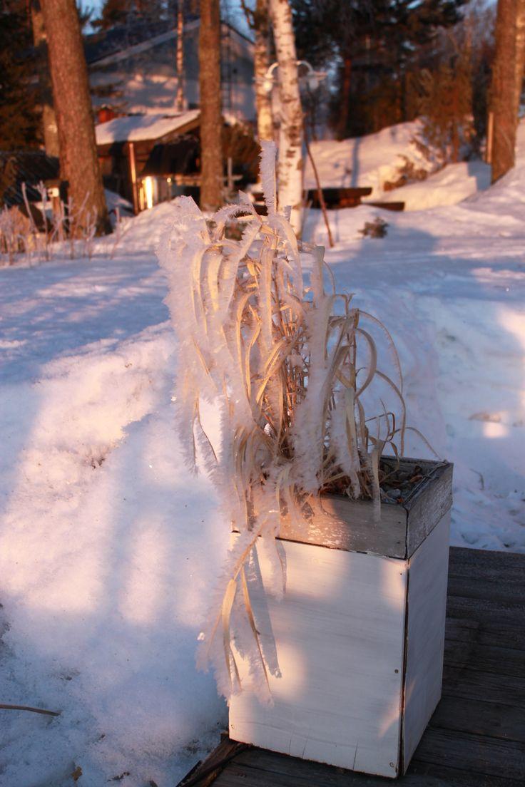 #kevät #luonto #piha #Puruvesi  #Punkaharju #Suomi #houseforsale #Finland  #spring