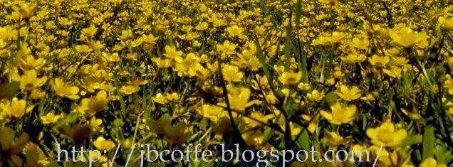 Ανθοκομική Έκθεση Περισσότερα από 600 είδη λουλουδιών και φυτών παρουσιάζονται στην Ανθοκομική Έκθεση http://biotevma.blogspot.gr/2014/10/anthokomikiekthesi.html