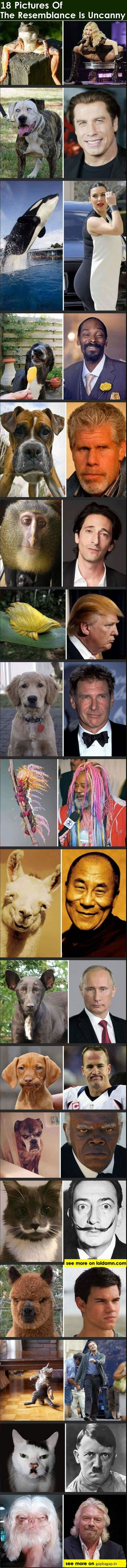 Funny Pictures Of Celebs vs. Animals