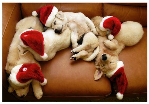 Santa Buddies. Holiday, Dogs, Golden Retrievers, Christmas Presents, Santa Baby, Christmas Puppies, Merry Christmas, Animal, Santa Puppies