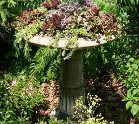 """This project cost a total of $20 because I used mostly materials and plants I already had. See it on """"Our Fairfield Garden"""" board on Pinterest @ Len and Barb Rosen."""