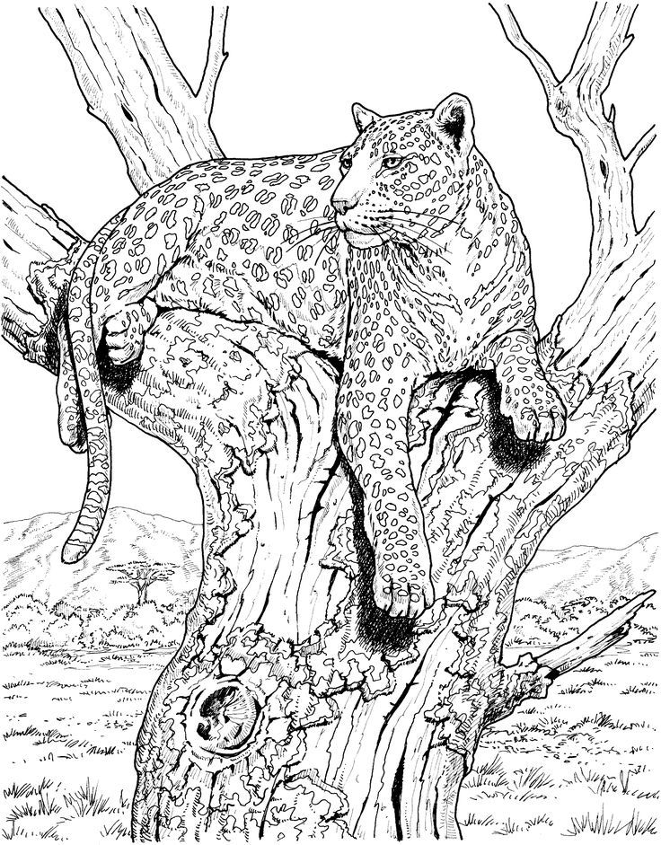Leopard 17 Gif 2129 2724 Colouring Pages Animals Animals Colouring Leopard17gif Pages Malvorlagen Malvorlagen Tiere Ausmalen
