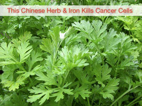 Pin By Jenny Richardson 3011 On Mandy Medicinal Herbs