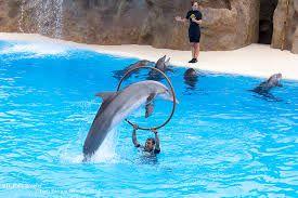 Marijn ging met zijn school naar een dolfijnen show daar kwam hij gehypnotiseerd en kwam het verleden terug