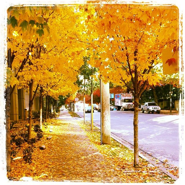 Autumn day in Yaletown, Vancouver