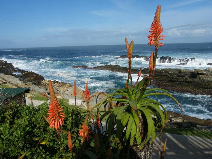 Jeffrey's Bay, Eastern Cape, South Africa