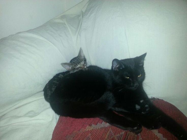 Wren and his big sis Artemis!