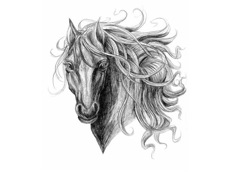 horse tattoo designs | Free designs - Horse with long hair tattoo wallpaper