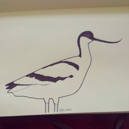 Day 16, #100daysofdoodling, an Avocet (Kluut) by Ayla Paul