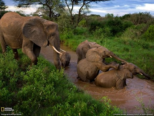 National Geographic (Animals) 世界地理动物篇