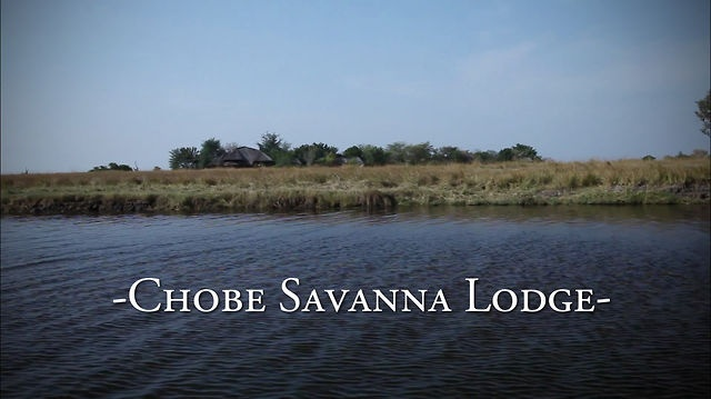 Chobe Savanna Lodge by Desert & Delta Safaris. #Chobe Savanna Lodge, located in the north eastern region of Namibias Caprivi strip is the perfect hideaway from which to experience the Chobe River system. Chobe Savanna Lodge, only accessible by boat, is a one hour water transfer from Kasane town and owns the most impressive views across the Chobe River and the Puku flats area of Chobe National Park. #Botswana