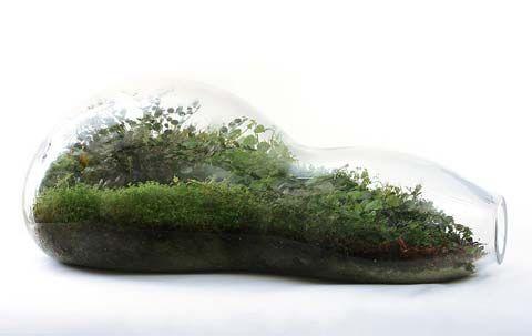 Terrarium by Paula Hayes