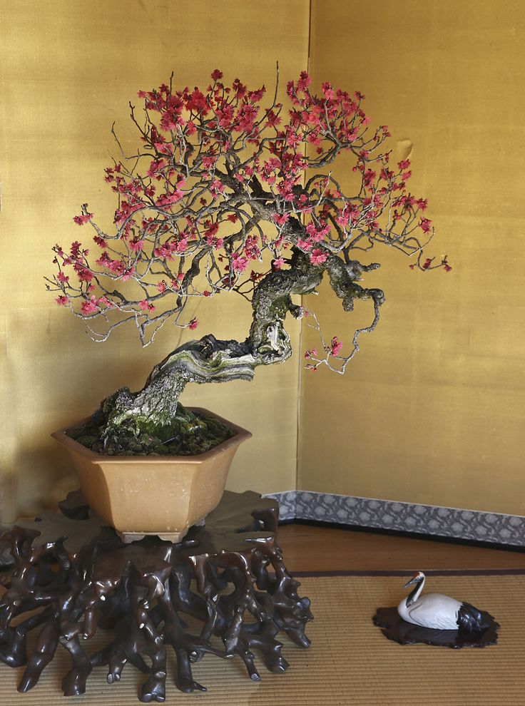 208 besten bonsai b ume bilder auf pinterest sukkulenten for Bonsai hydrokultur