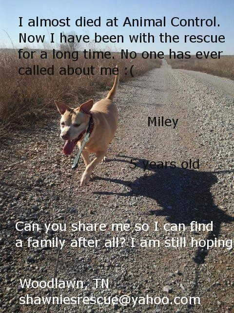 Miley is almost died at animal control. No one has ever asked about her.