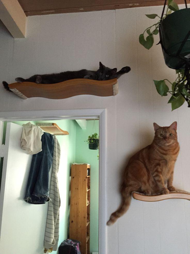 Best 25 Cat Shelves Ideas On Pinterest Cat Wall Shelves