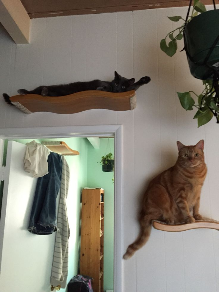 Cat Shelves These Are The Best Shelves Bought Them On