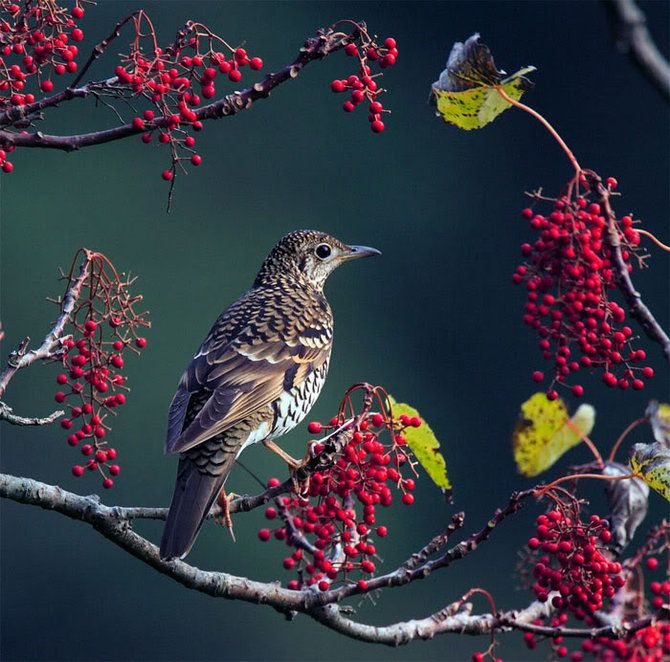 Фотографии птиц Джона Сунга (John Soong)
