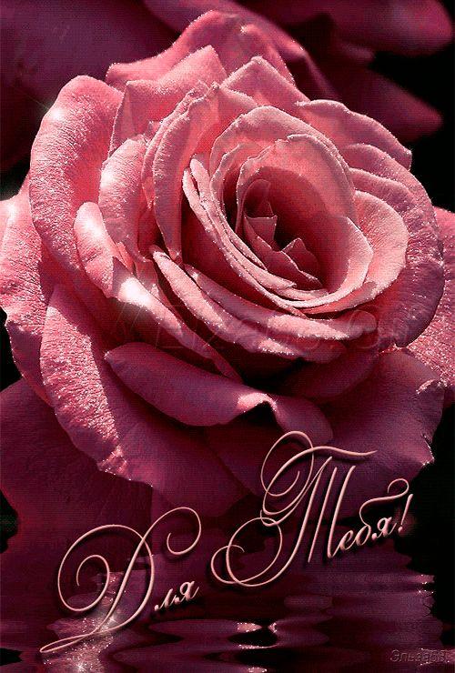Цветы большие открытки это тебе розы