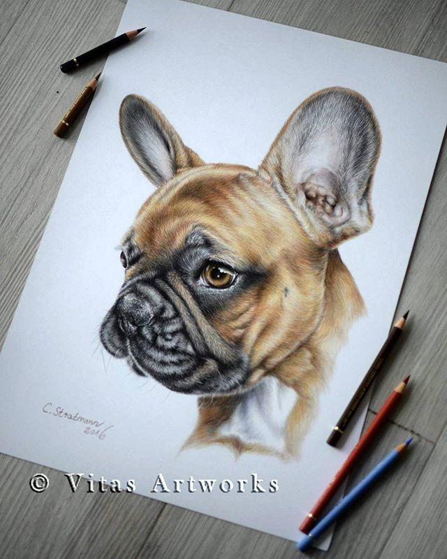 Draw Fur Fell Zeichnen French Bulldog In Colour Pencils