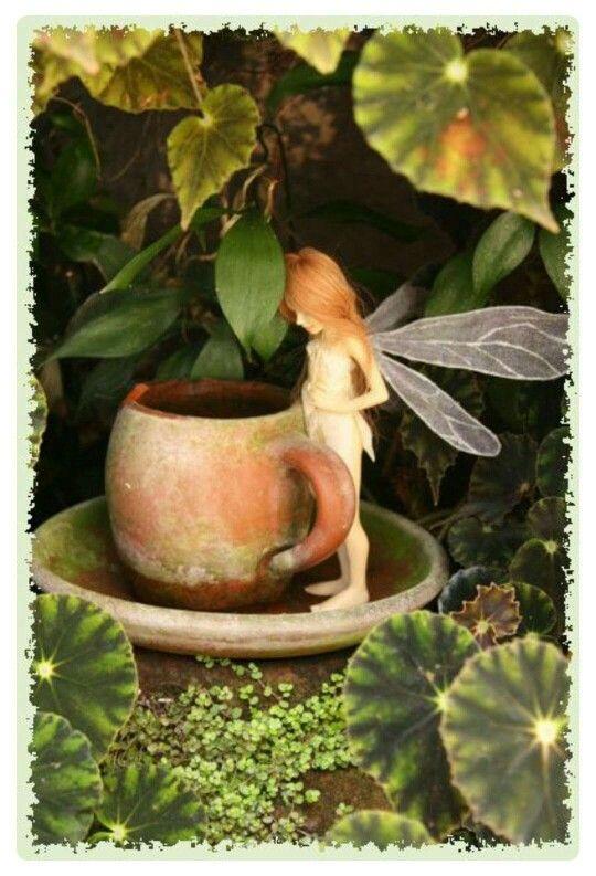 Seeet fairy