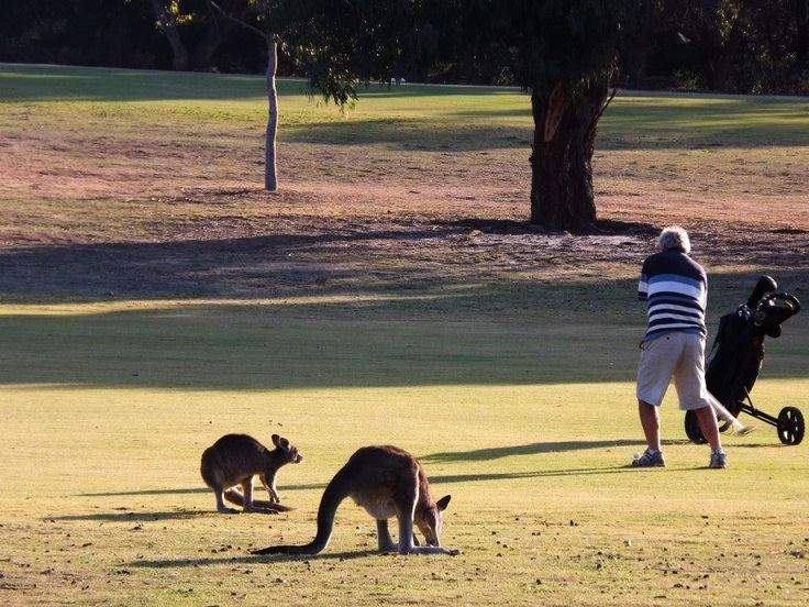 The golf course in Anglesea