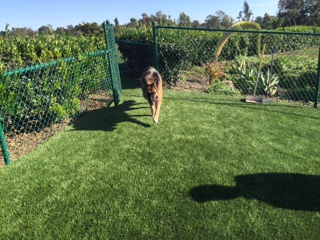 Turf Backyard Dogs : backyard just got better! wwweasyturfcom l pet friendly l fake grass
